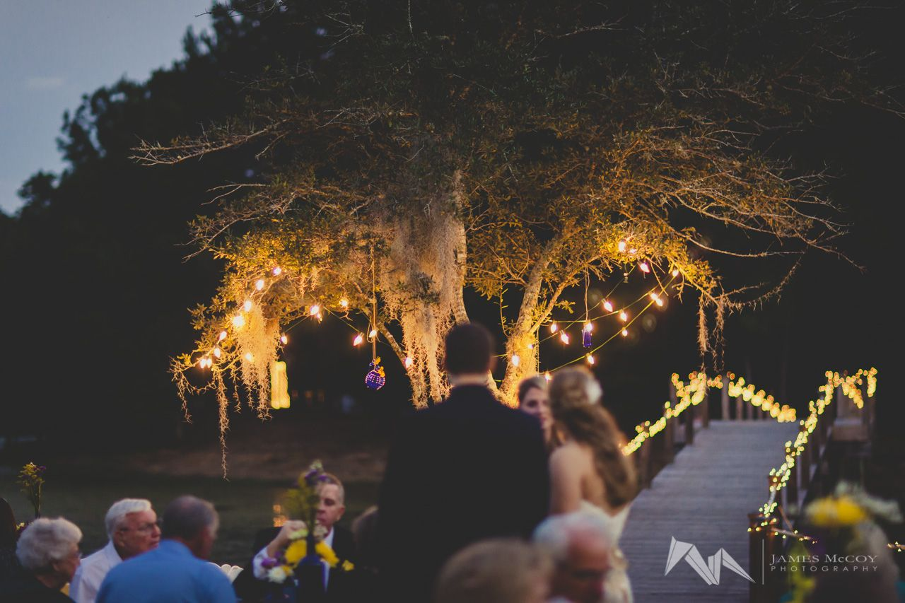 James Island Lights Custom Tree Lit With Outdoor Lights For A Night Reception At Bulow Decorating Inspiration
