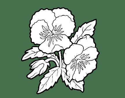 Resultado De Imagen Para Dibujos De Flores Pensamientos Para Pintar Imagenes Para Dibujar Dibujo De Flor Dibujos De Flores