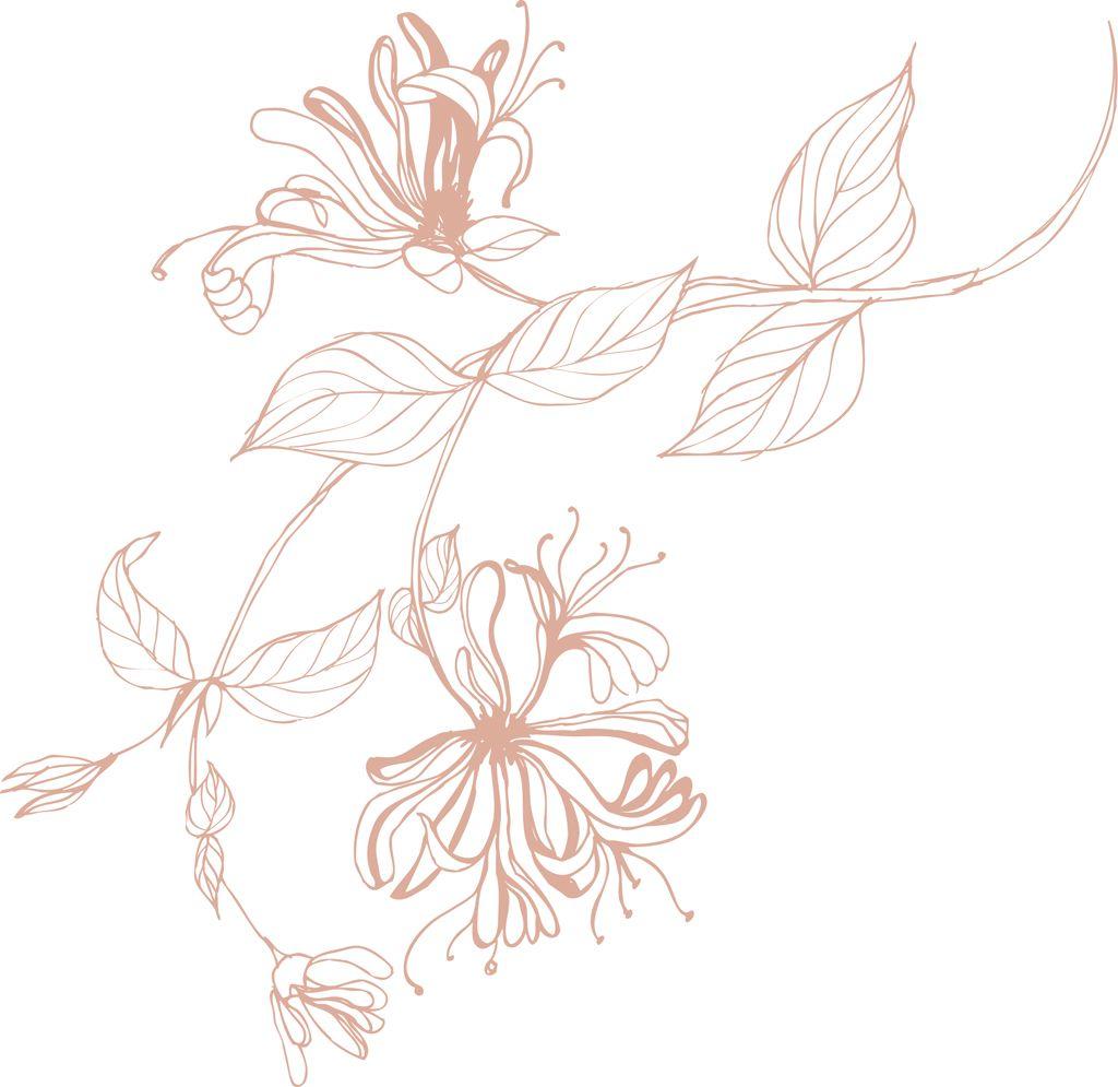 honeysuckle drawin Honeysuckle tattoo, Flower vine