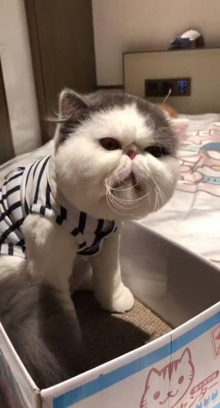 42+ Ideas Baby Funny Face Cats   - Baby Baby Baby - #Baby #cats #Face #funny #ideas