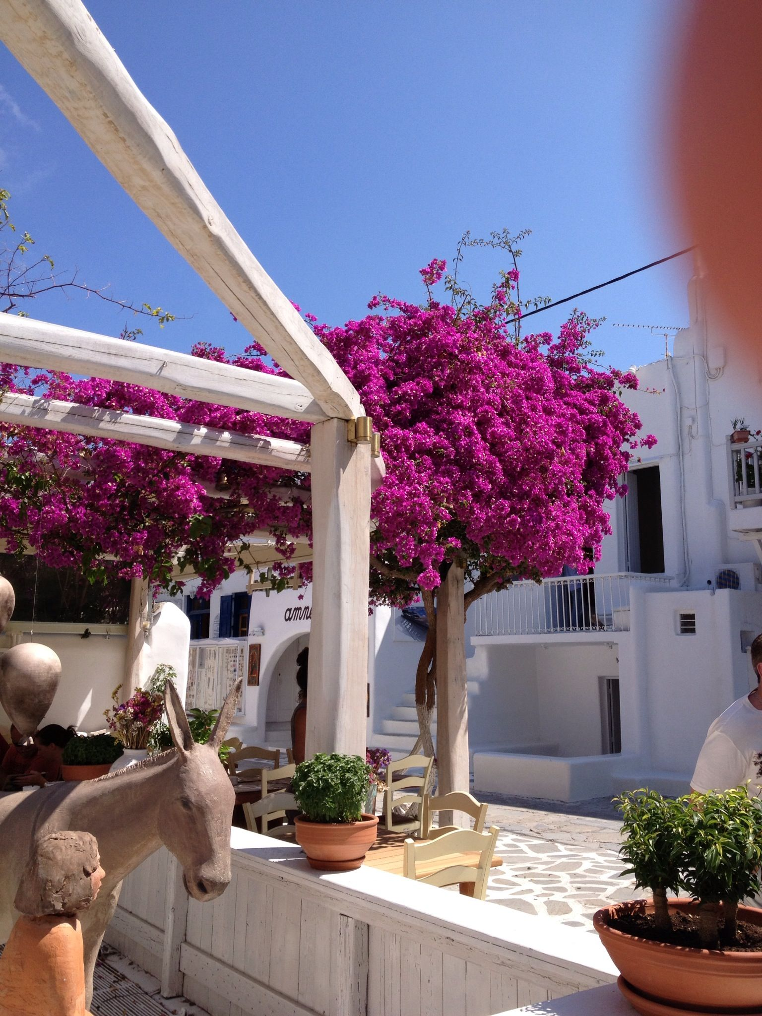 Casual dining with overhanging bougainvillea. MSK Photos ... on Relaxed Outdoor Living id=95036