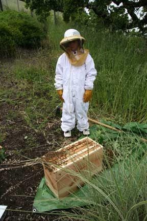 Beekeeping and Children