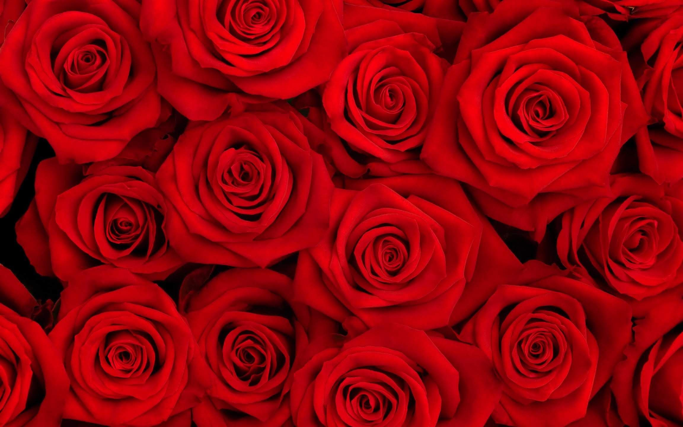 Lit De Roses Voyage Onirique Fond D Ecran Fleur Rose Photo De Fleur Rose Fond D Ecran Telephone