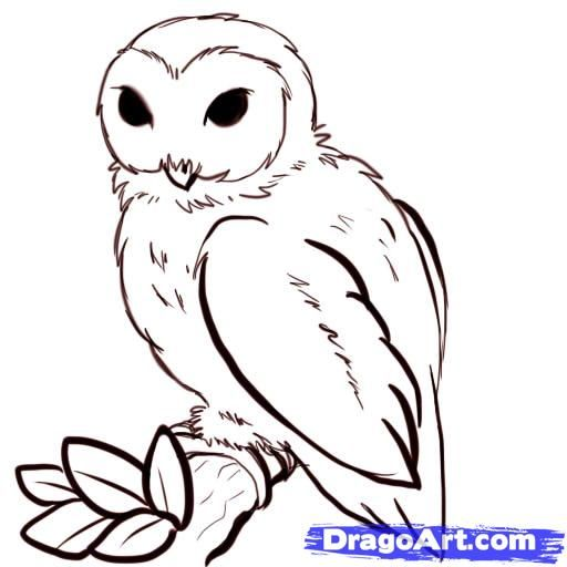 Simple owl drawings how to draw owls step by step for Draw the owl