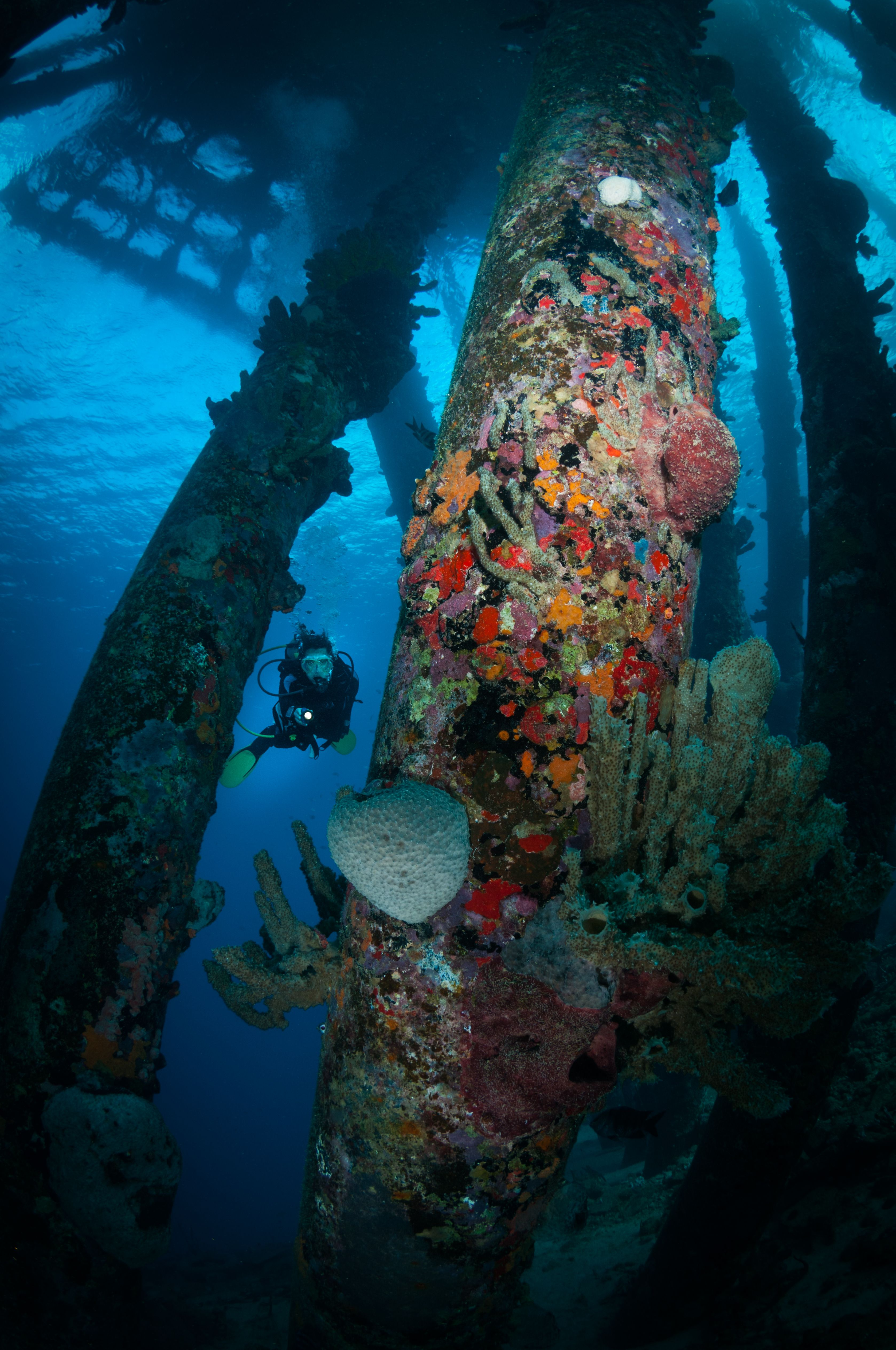 A Divers Guide To Aruba, Bonaire, Curaçao In 2020
