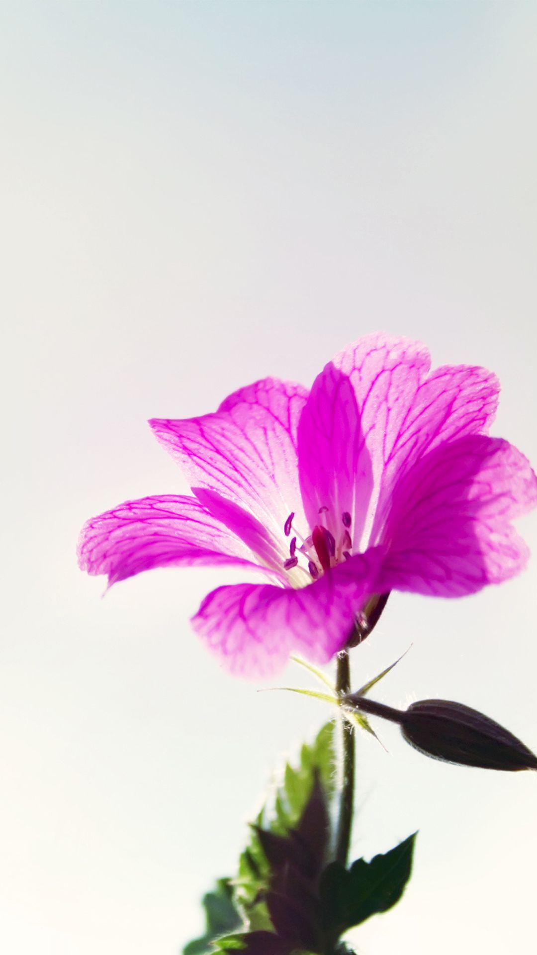 Little Purple Flower Macro iPhone 7 wallpaper Flower