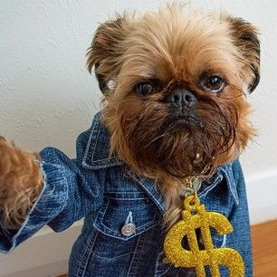 It's all about the bling. | 29 Style Lessons From Instagram's Most Fashionable Puppies