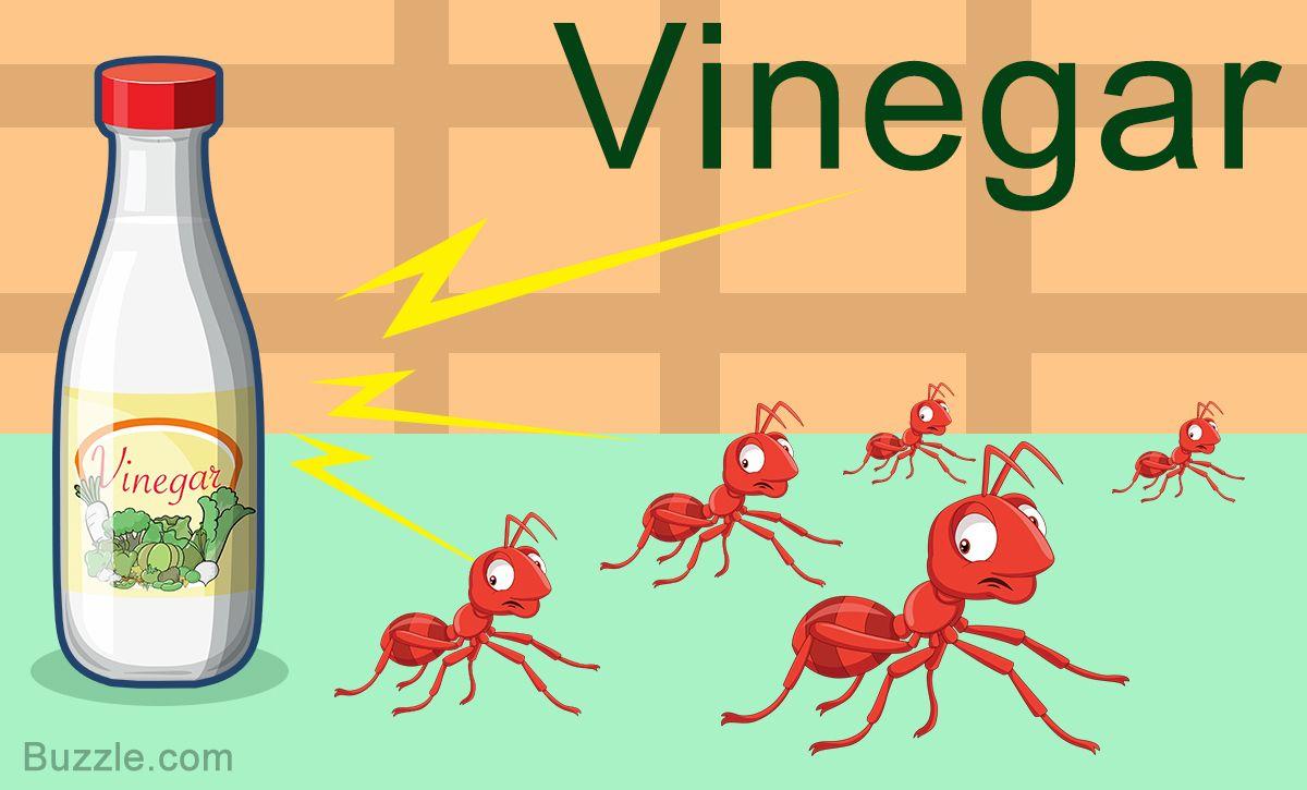 Home remedies to get rid of ants vinegar rid of ants