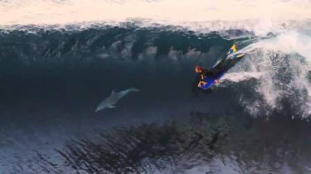 Golfinho pega onda junto com surfista. Assista!