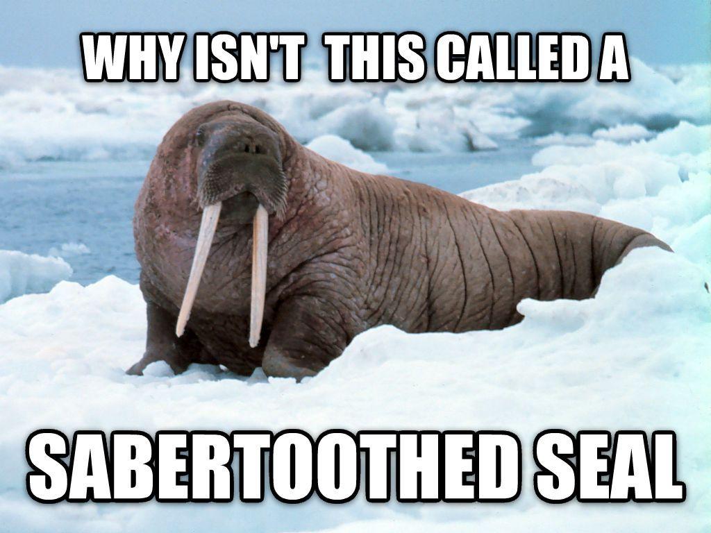 Sounds more badass than walrus Walrus