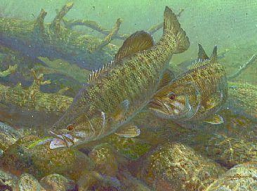 Smallmouth bass susquehanna smallmouths clouser minnow for Bass fishing art