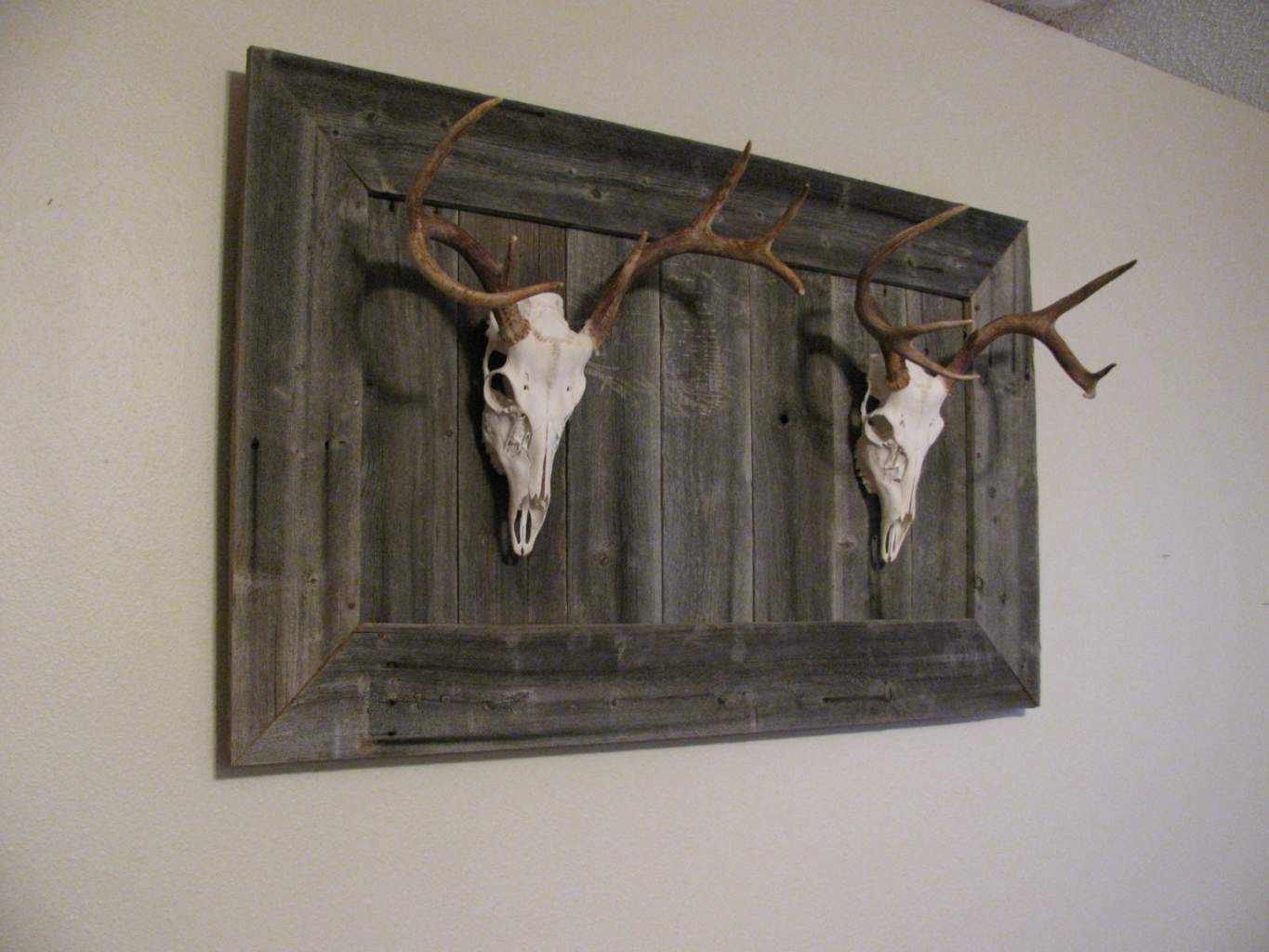 Deer skull mount ideas - Love This Idea For Our European Mounts I See A Project Coming Deer Skullsdeer