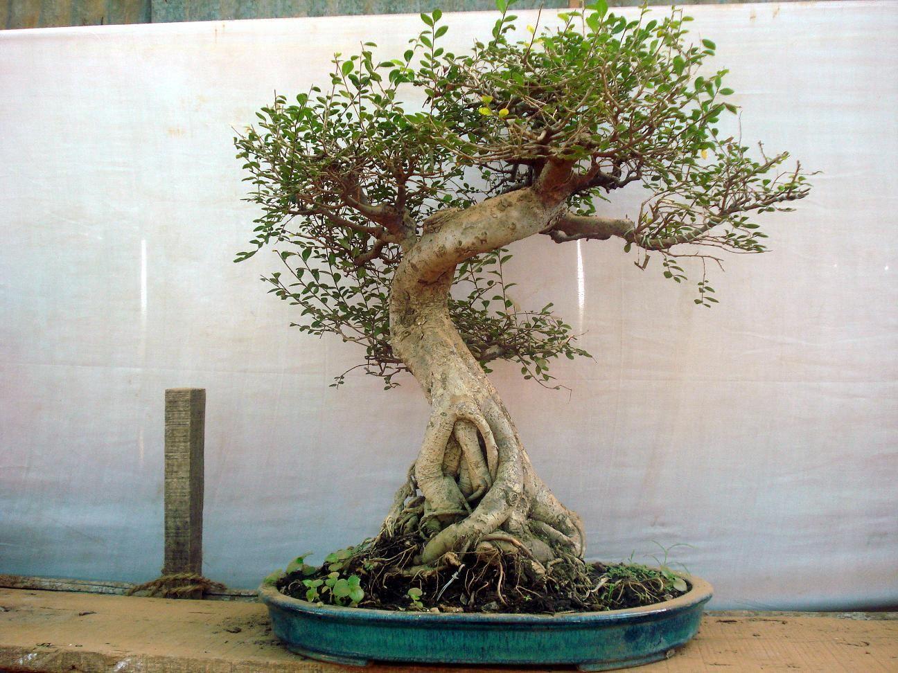How To Make An Artificial Bonsai Tree