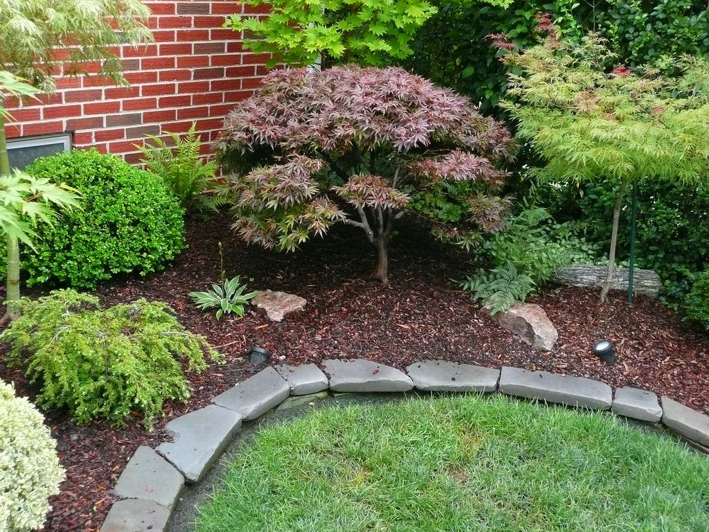 Image result for ideas for a dwarf japanese maple in ...