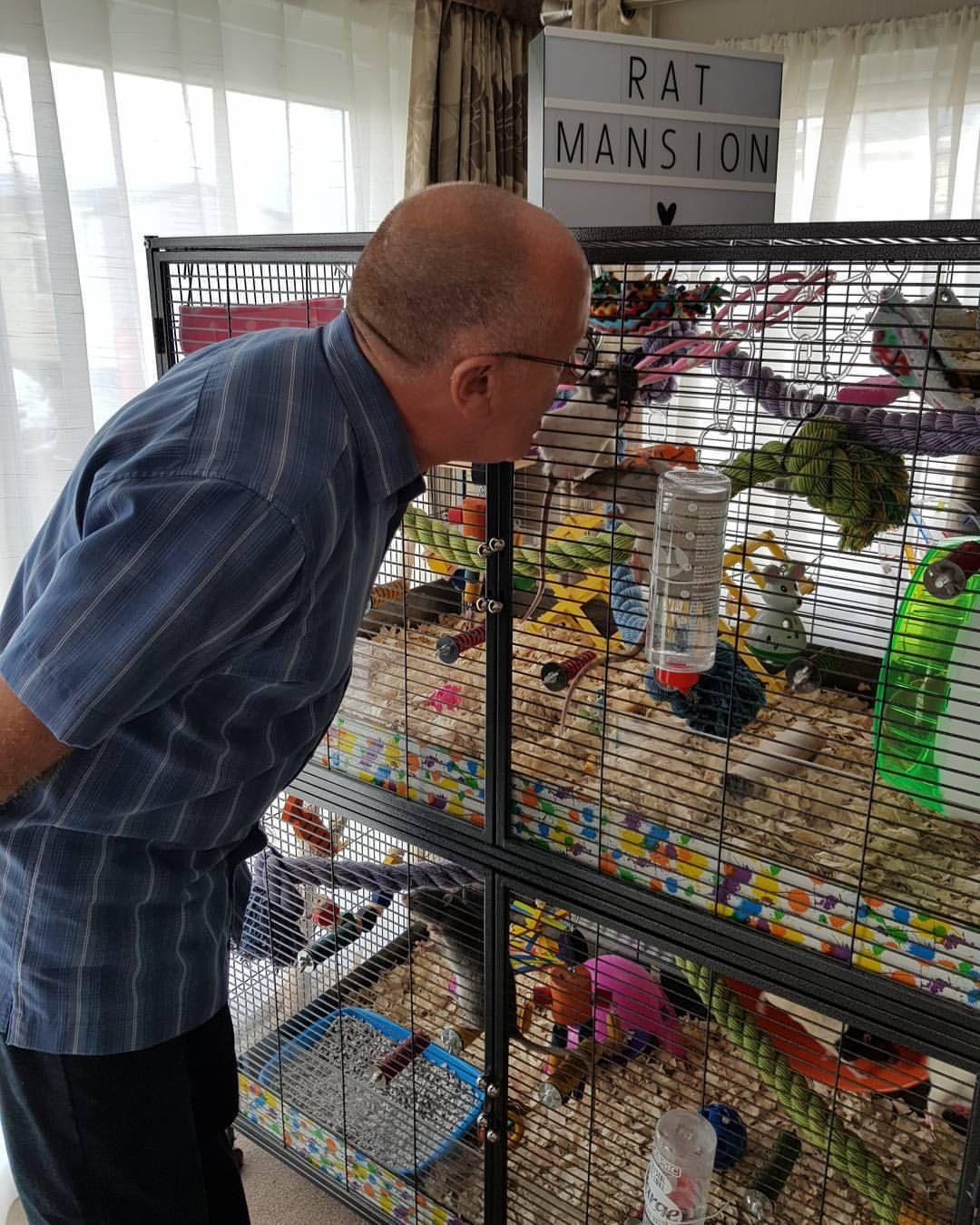 Savic Suite Royal Xl Pet Rat Cages Pet Rats Rat Cage