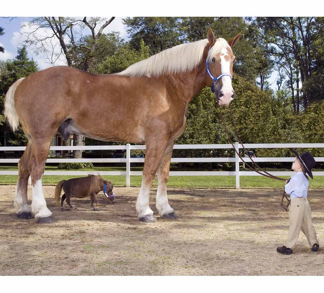 From Large To Small Horses And Ponies Are Terrific