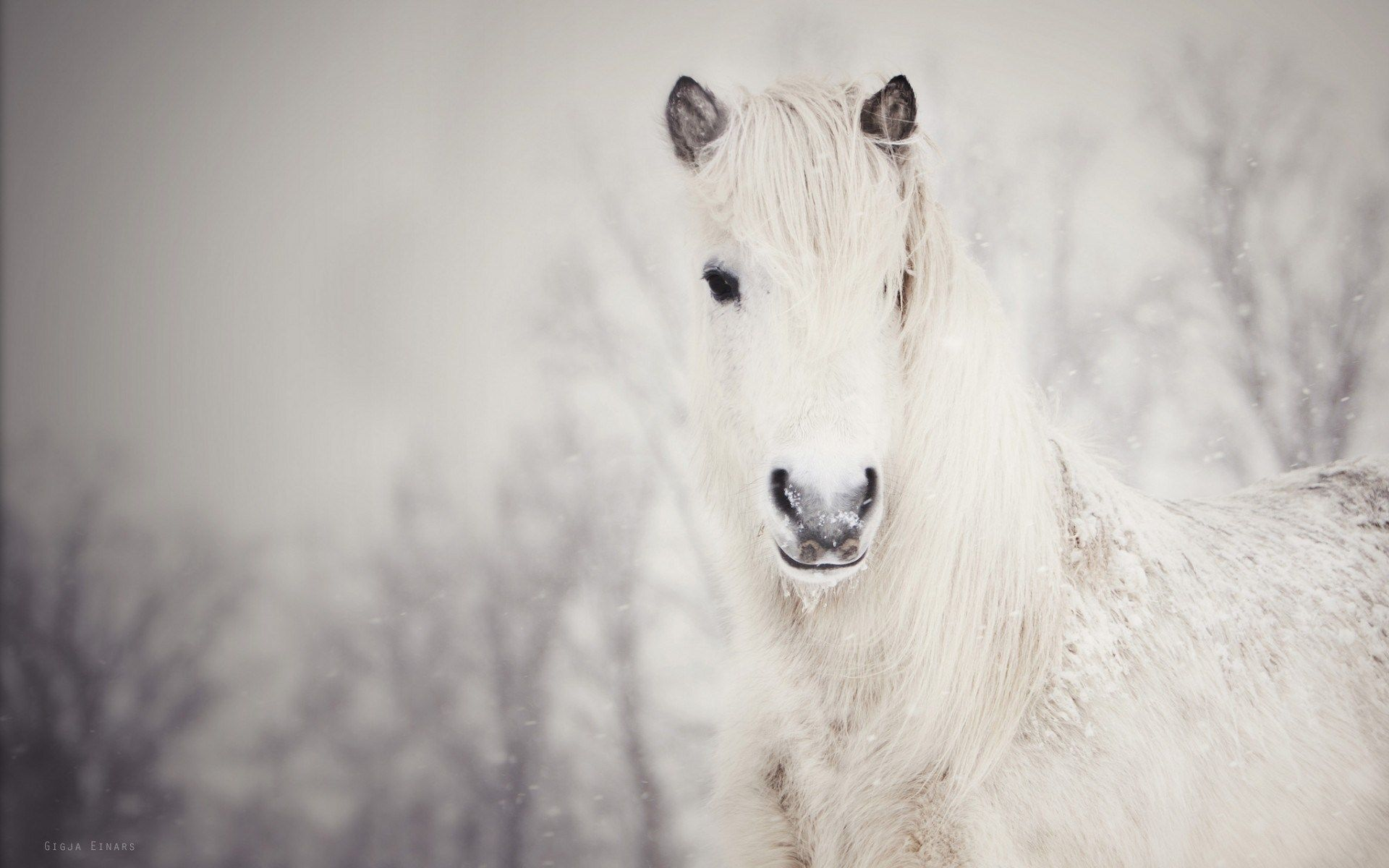 Simple Wallpaper Horse Winter - 583cc1e4e16d1bcff5c1c3ed8c09eb94  Pictures_93628.jpg