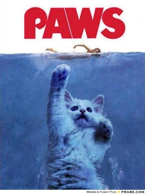 Jaws Movie Poster Kitten Attacking Woman Paws Crazy Cats Cat Attack Cats