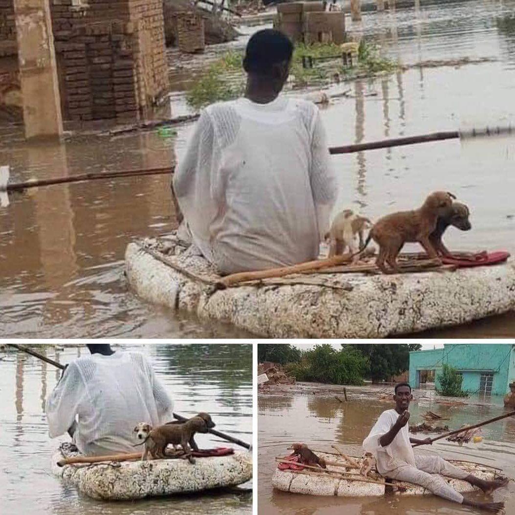 خالد الوليدي On Instagram صورة لرجل يقوم بإنقاذ الكلاب بعد الفيضانات حفظ الله السودانيين من كل شر السودان فيضانات فيضانات السودان In 2020 Animals Kangaroo
