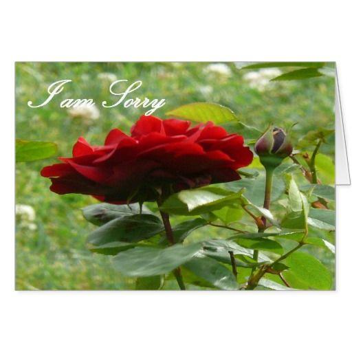 I Am Sorry Beautiful Rose Card Zazzle Com Beautiful Roses