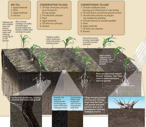 How No Till Stacks Up No Till Farming Soil Health Farming System