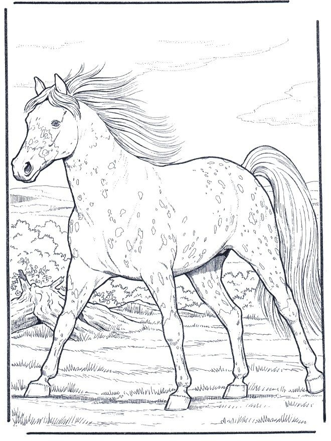 Appaloosa Horse Horse Coloring Books Horse Coloring Pages Horse Coloring