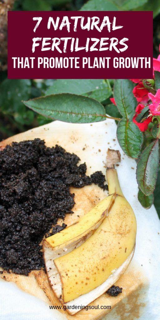 7 Natural Fertilizers That Promote Plant Growth 400 x 300