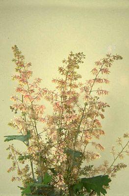 Anthurium Andraeanum Beautiful Flowers Wonderful Flowers Amazing Flowers