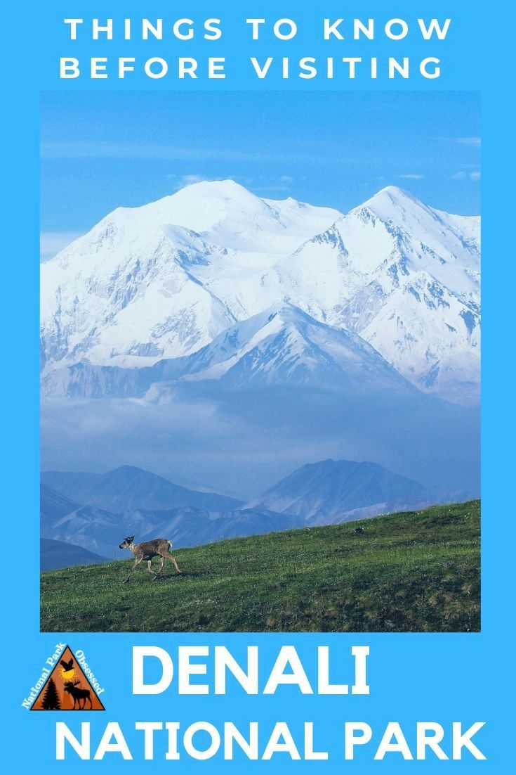 11 Things To Know Before Visiting Denali National Park And
