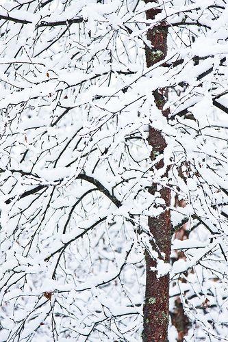 vvv blizzard of ahhh's