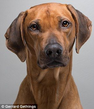 Celebrity Pets Photographed In Charity Exhibition For Dogs Trust Dogs Big Dog Breeds Dogs Trust