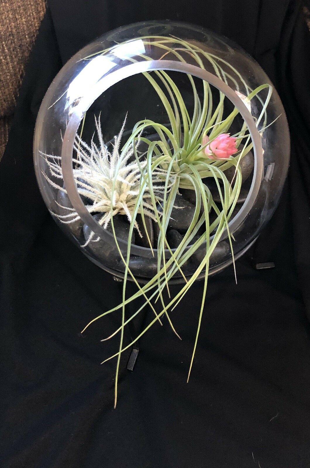 Spiral Iron Display Stand Glass Globe Airplant Terrarium