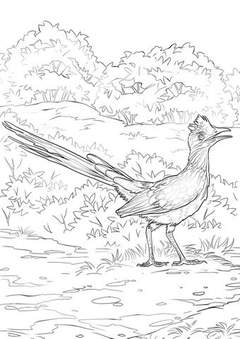 Lesser Roadrunner Coloring Page From Roadrunner Category Select