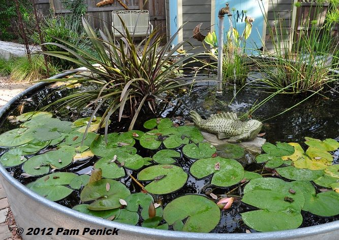 Share Tweet Pin Mail How To Make A Container Pond In A Stock Tank Is Consistently One Of My Most Viewed Pos Container Water Gardens Ponds Backyard Fish Ponds