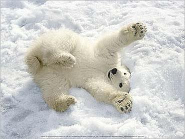 Pin By Anita James On Animals Baby Polar Bears Cute Polar Bear Cute Animals