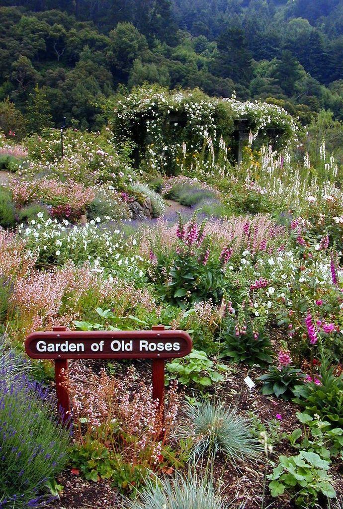 ROSE GARDENS Garden of Old Roses UCBotanical Garden Berkeley