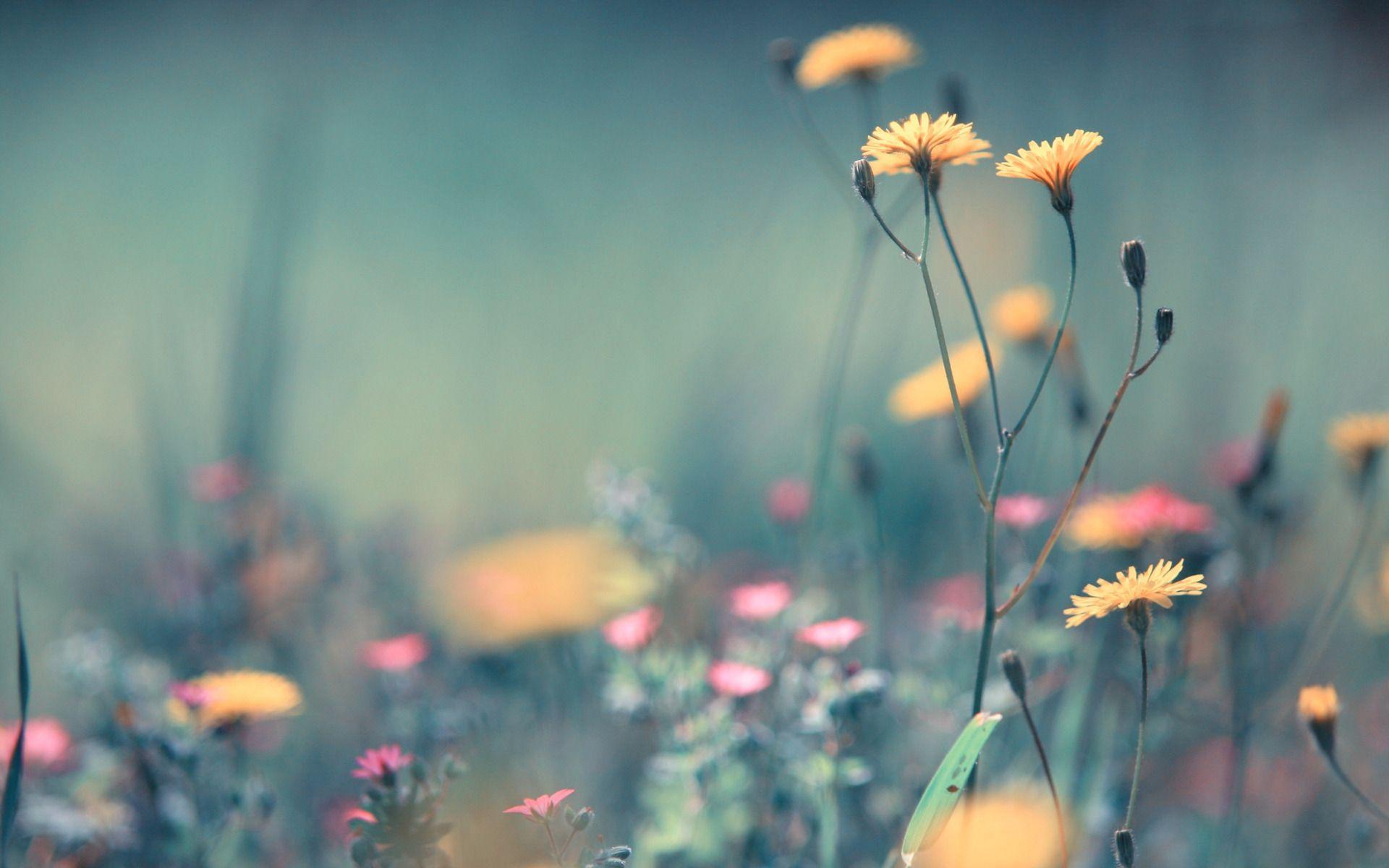 Summer Desktop Wallpaper Background Hd Flower Phone Wallpaper Wild Flowers Nature