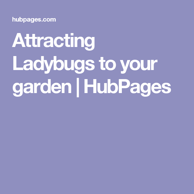 Attracting Ladybugs to your garden | HubPages