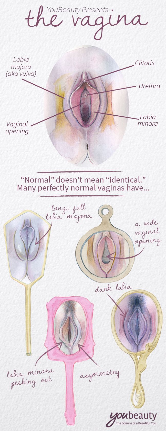 Beautyful vulva or labia