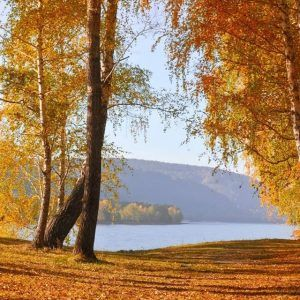 Fond D Ecran Hd Iphone Fond D Ecran Wallpaper Haute Definition Pour Votre Smartphone Derniere Generation Et Votre Ord Autumn Scenery Autumn Nature Scenery