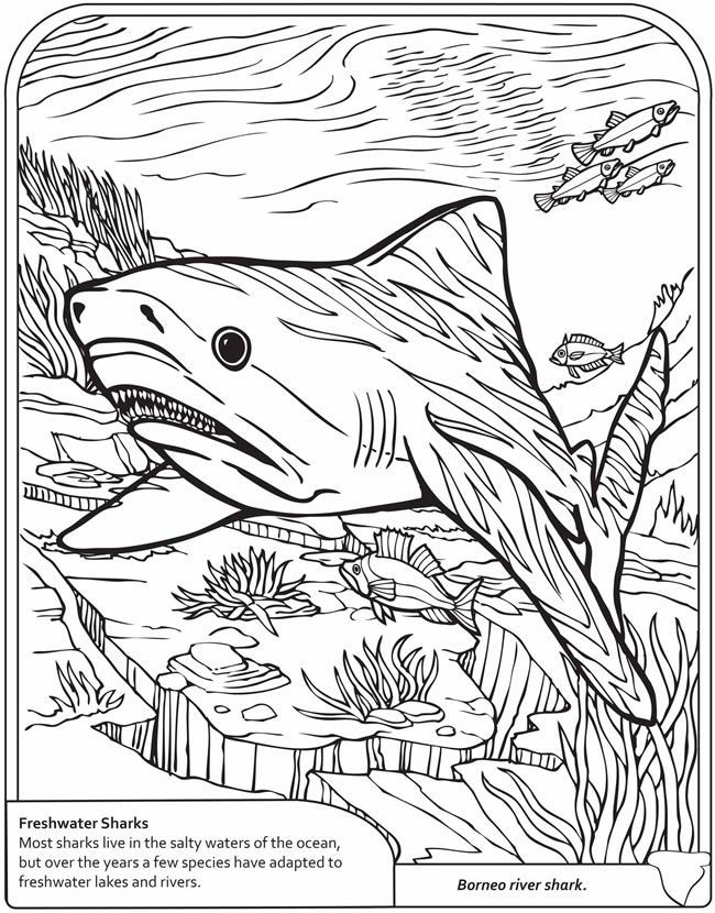 dover sharks to coloring - Pesquisa Google | Coloring Pages | Pinterest