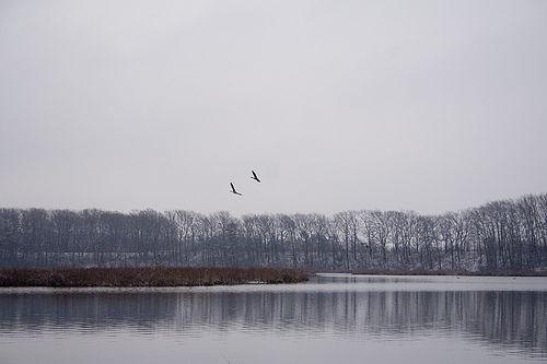 Flight | Spring in Waterloo | Birds, Mountains