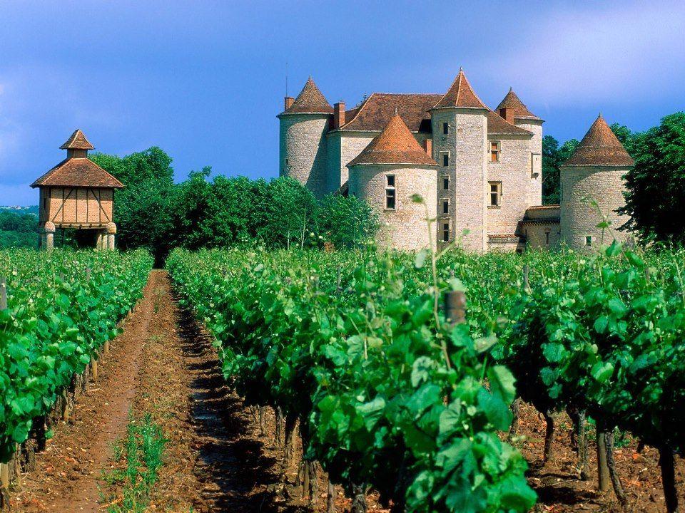 Vineyard Cahors Lot Valley France European Vines