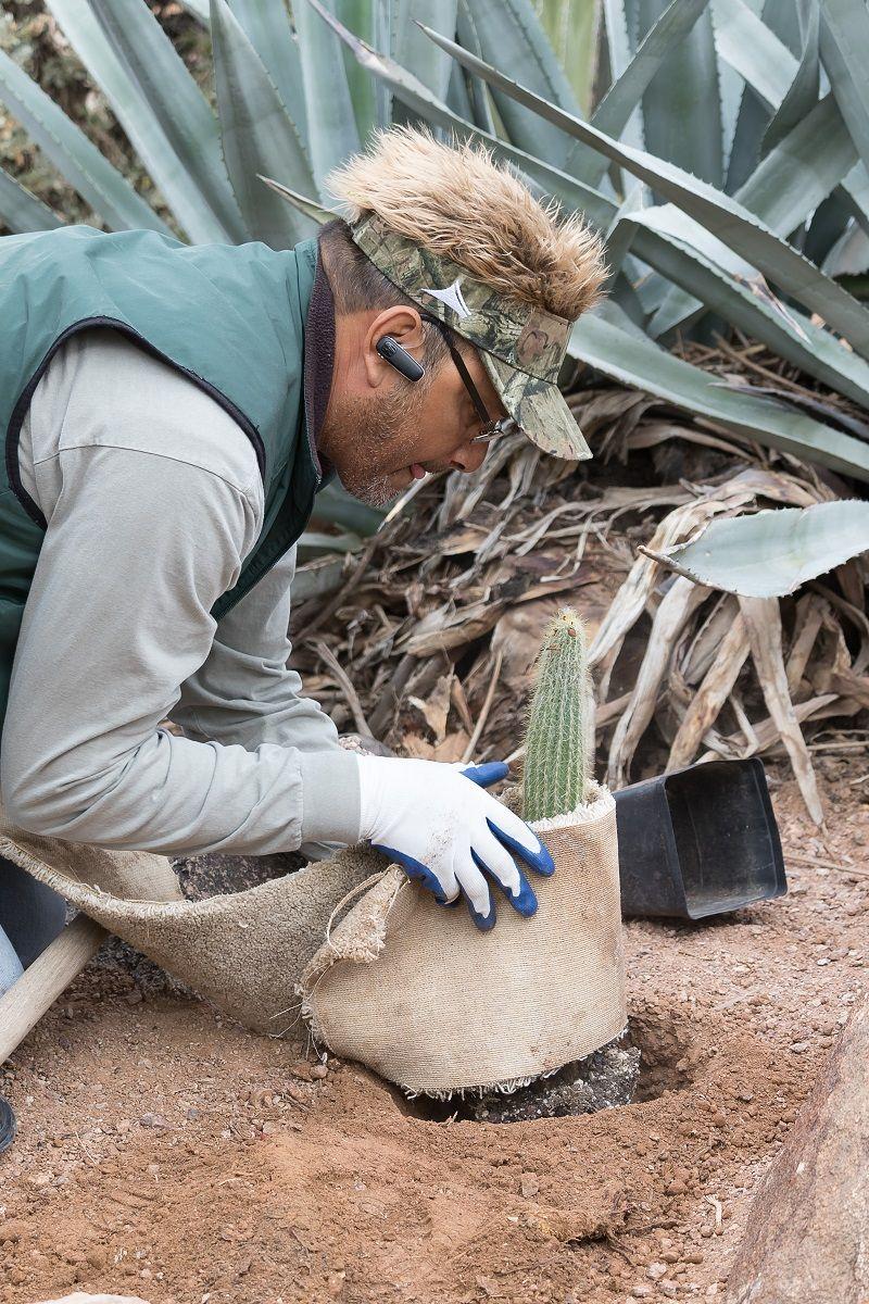 Favorite Tools for Moving Cacti Desert botanical garden
