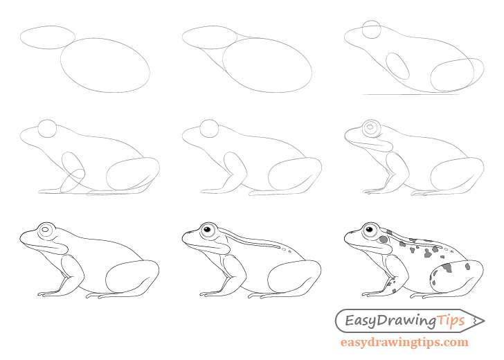 How to Draw a Frog Step by Step Tutorial in 2020 (With ...