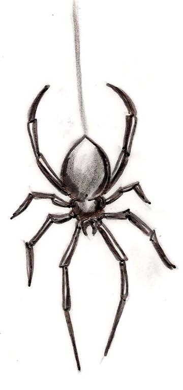 Black Widow Spider Tattoo By Metacharis On Deviantart