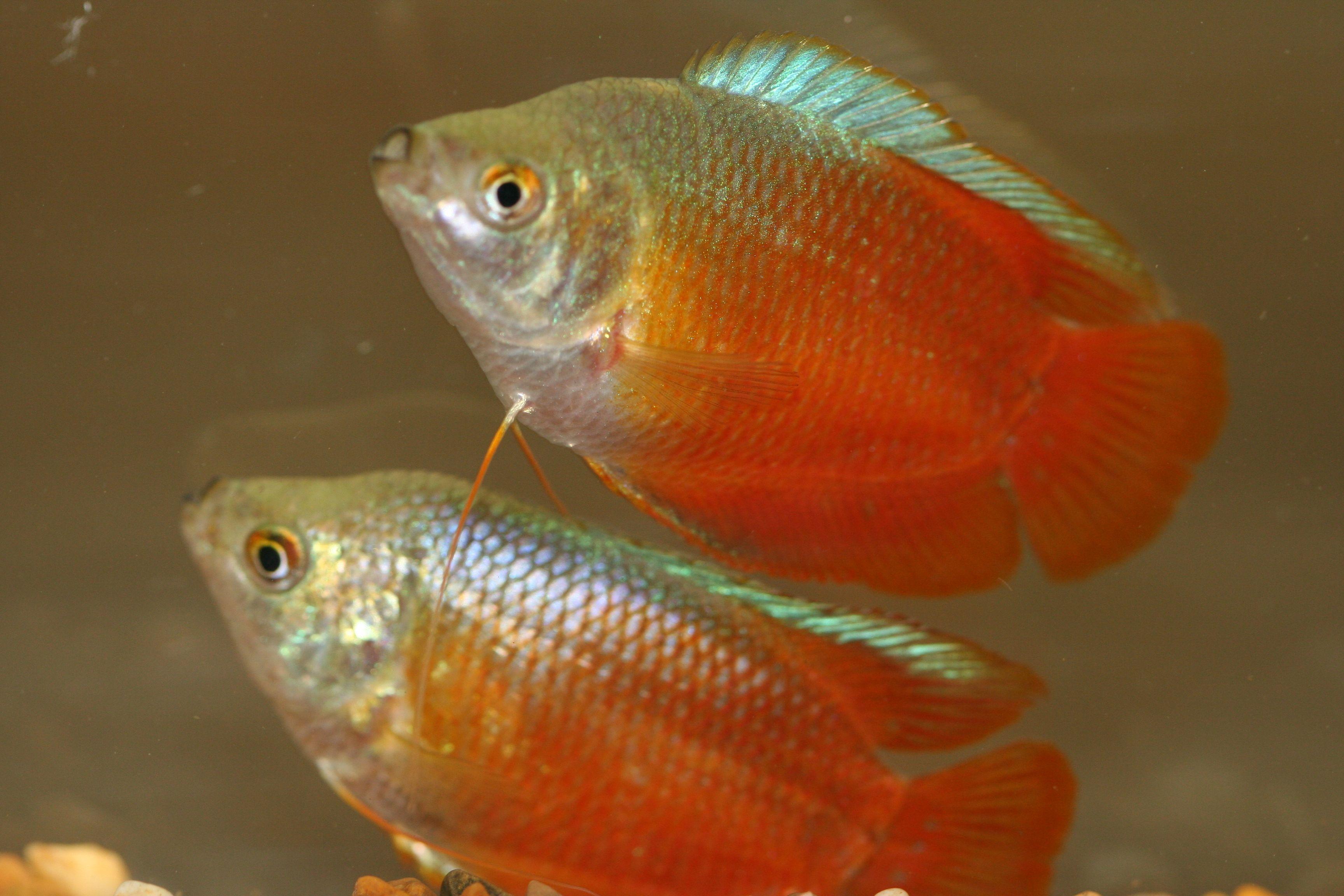 Freshwater fish care - Fish