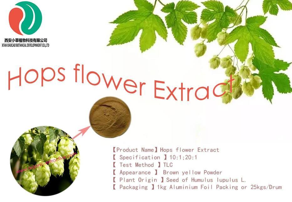 Hops Flower Extract Hop Flower Flower Extract Flowers