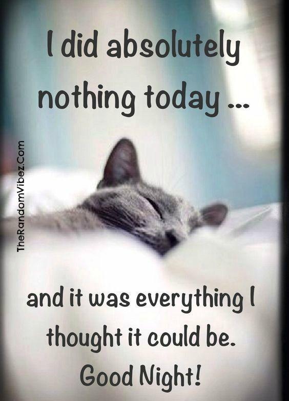 75+ Hilarious Good Night Memes, Images & Pics | Good night ...