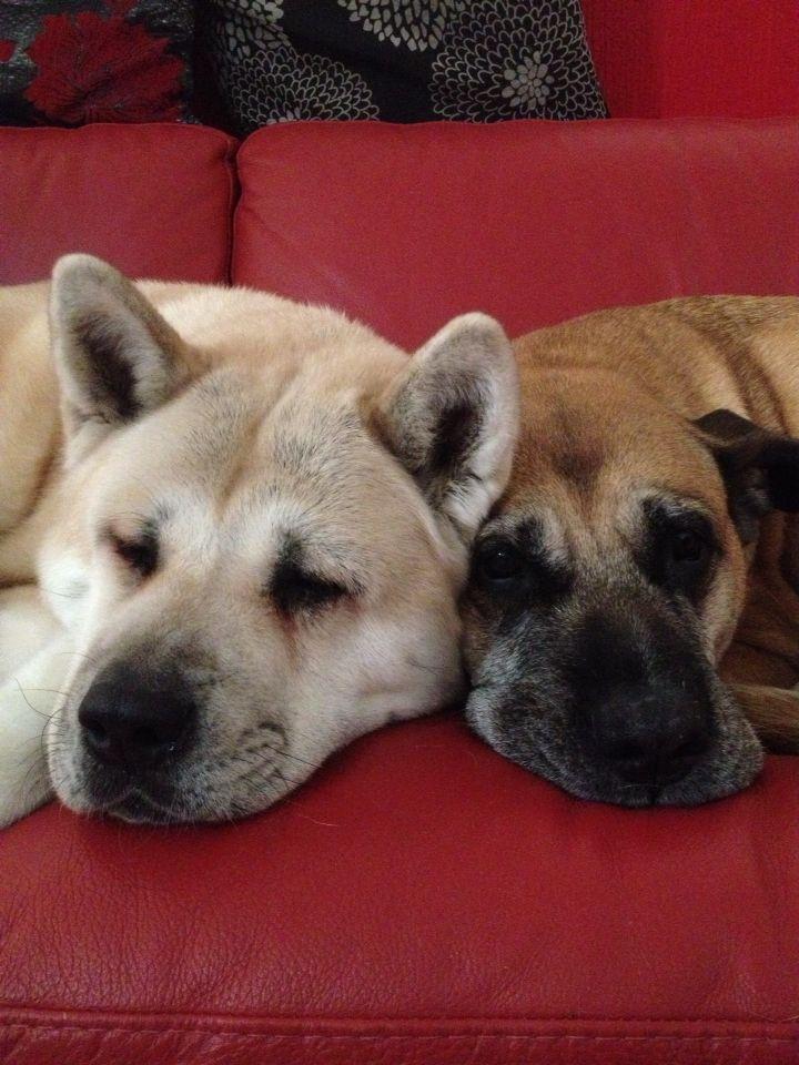 My doggies <3